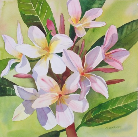 Frangipani in Pink - Watercolour 27 x 27 cms