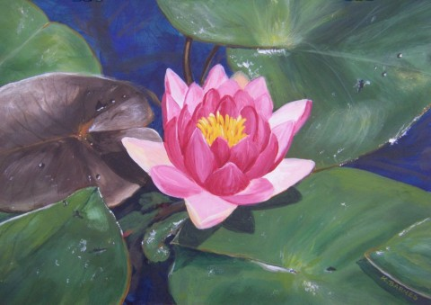 Waterlily Perfection - Acrylic 25 x 25 cms